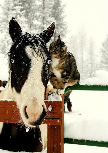cat-horse-2