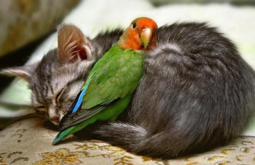gato-passaro