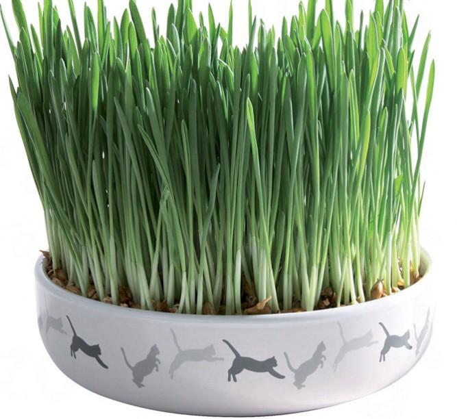 plantas boas e plantas venenosas para gatos